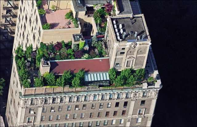 גגות ניו יורק