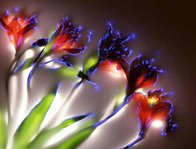 פרחים מחשמלים