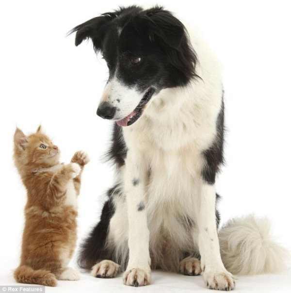 תמונות מקסימות של בעלי חיים