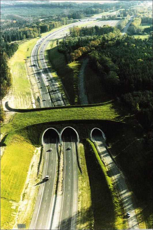 גשרים אקולוגיים