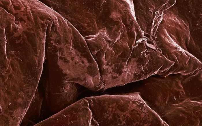 אוכל מנקודת מבט מיקרוסקופית