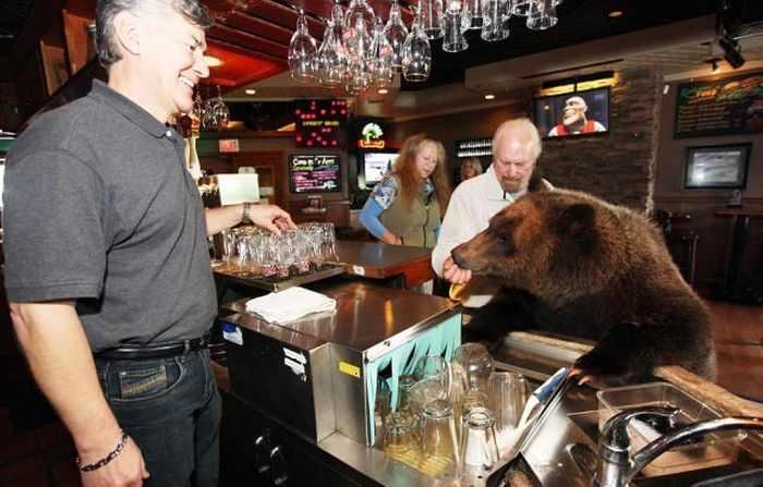 משפחה מגדלת דוב גריזלי כחיית מחמד