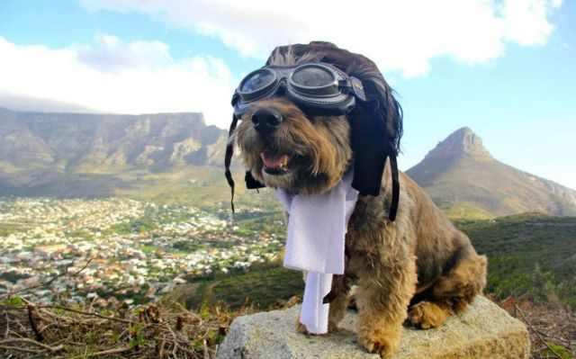 אוסקר הכלב המטייל בעולם