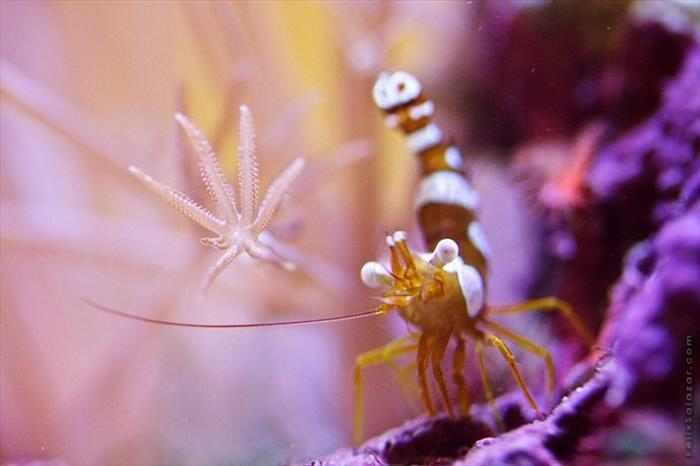 תמונות מרהיבות של אלמוגים!