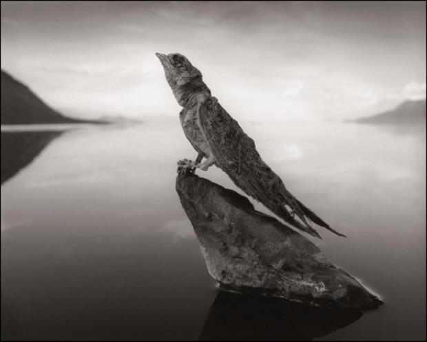 האגם שהופך ציפורים לפסלי אבן