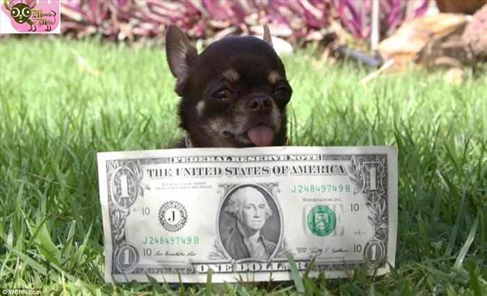 הכלבה הקטנה בעולם