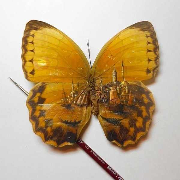 Drawing on butterflies and tiny objects