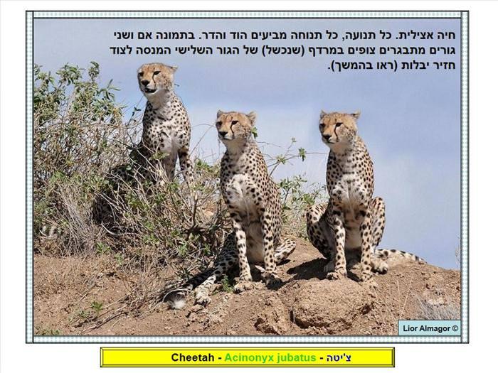 בעלי חיים באפריקה
