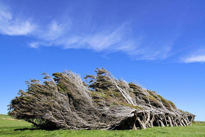 העצים של סלופ פוינט