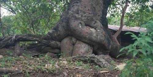 איך נולדים עצים?