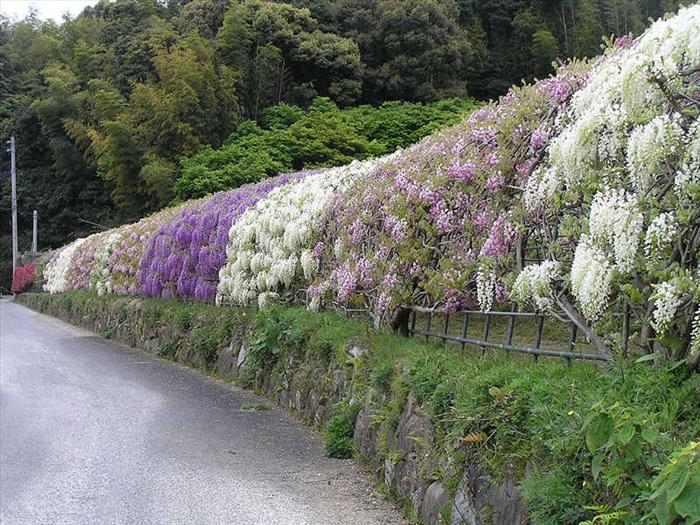 גן הפרחים הסוריאליסטי ביפן!