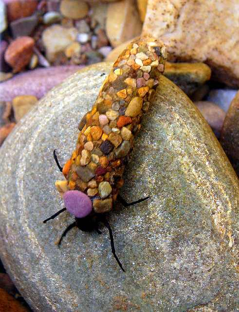 חרקים שמייצירים תכשיטים בטבע