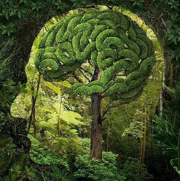 תמונות סוראליסטיות של מציאות ודמיון