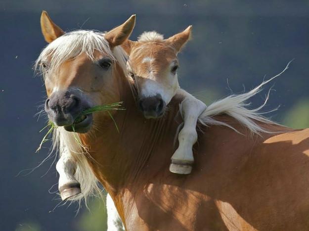 חיות אוהבות - כוחו של חיבוק