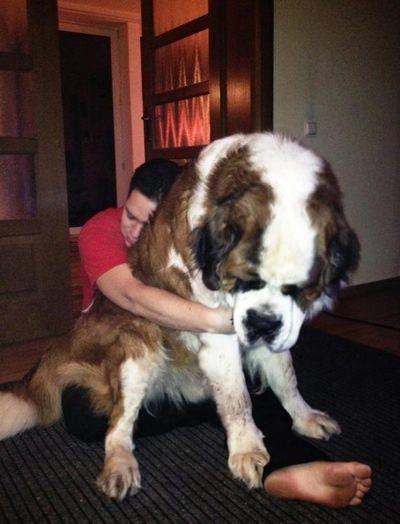 חיות גדולות מדי