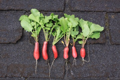 ירקות שורש בריאים