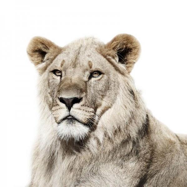 פורטרטים מקסימים של בעלי חיים