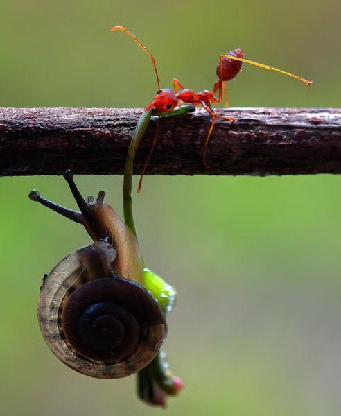 עבודת צוות אצל בעלי חיים