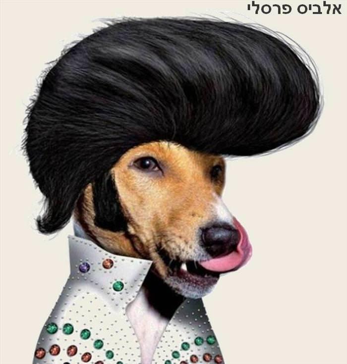 הכלבים הכי מפורסמים בעולם - מצחיק!