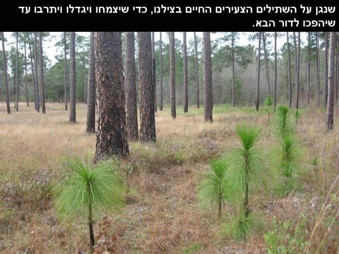 ללמוד מהעצים - ברכה מיוחדת לט``ו בשבט