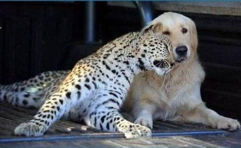 חברויות מקסימות ומשונות