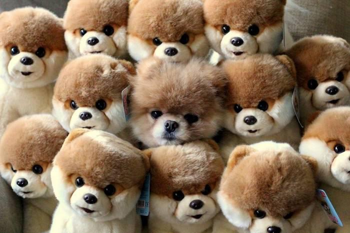 חיות חמודות