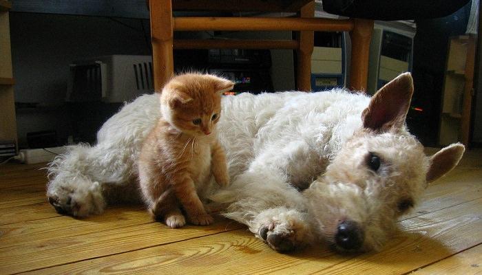 כלבים חתולים מחלות