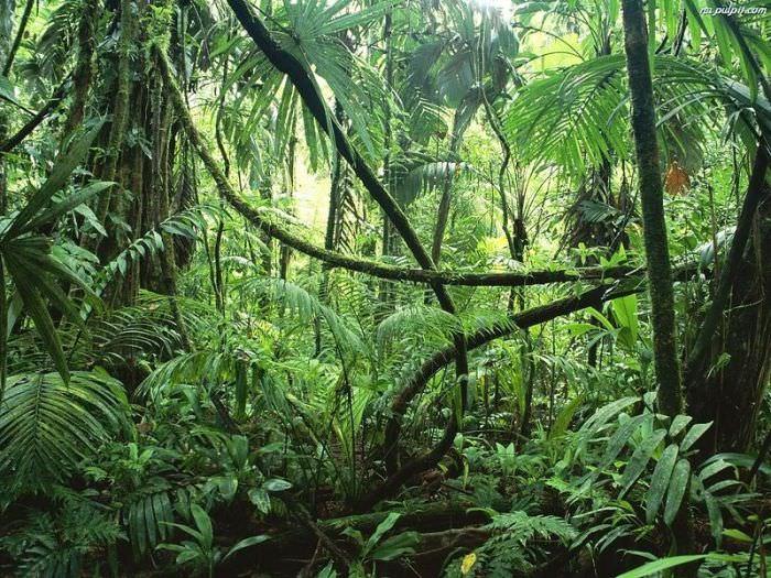 יער האמזונזס