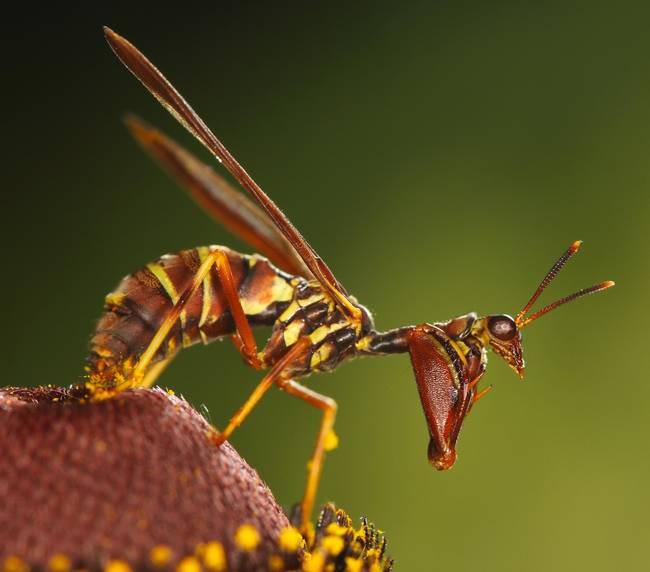 חרקים בתחפושת