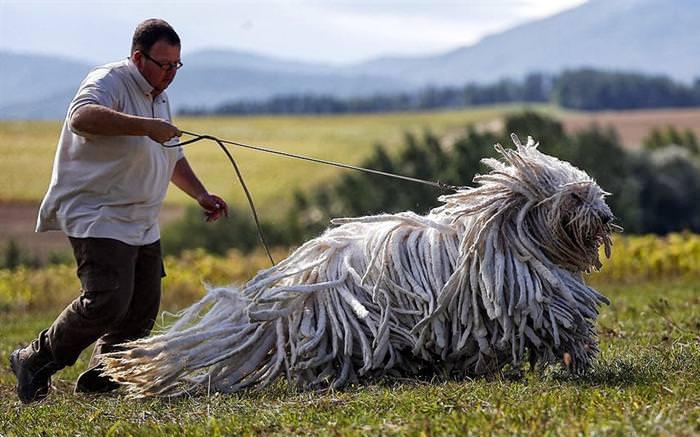 23 חיות מדהימות שלא תאמינו שקיימות במציאות