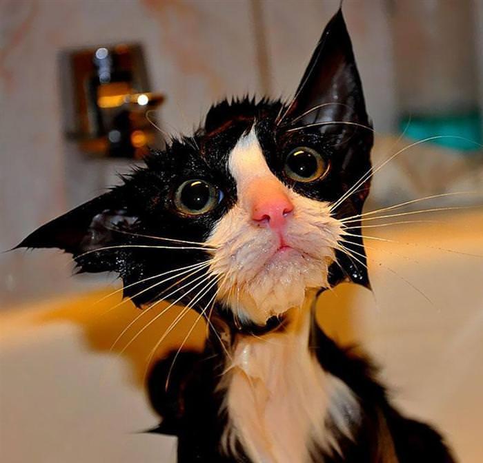 חתולים מצחיקים