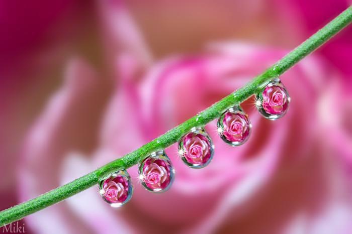 פרחים בטיפות