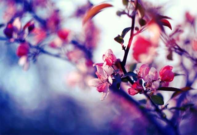 ציטוטי אביב