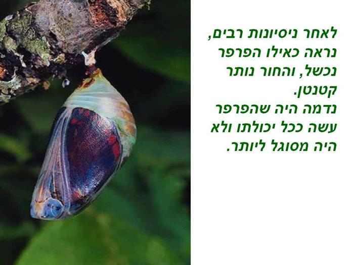 החיים הם כמו פרפר - משל חכם ומרגש!