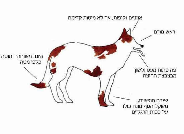 שפת גוף של כלבים