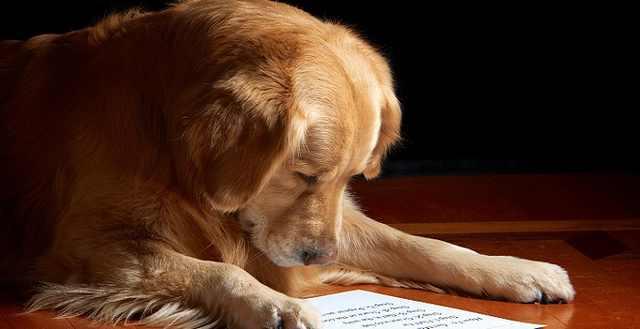 התנהגות כלבים