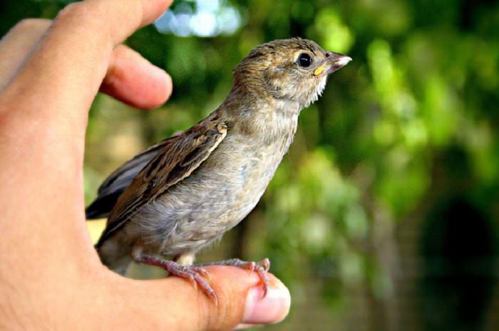 ברכה מרגשת: ציפור יושבת על אצבע של אדם