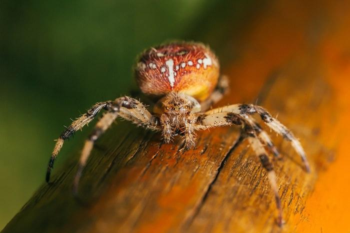 פתרונות טבעיים נגד עכבישים