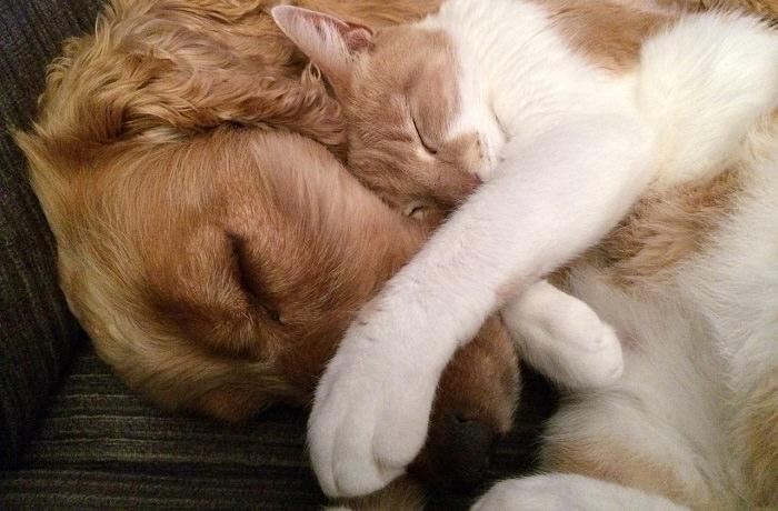 בדיקות ביתיות לבעלי חיים: כלב וחתול ישנים ביחד