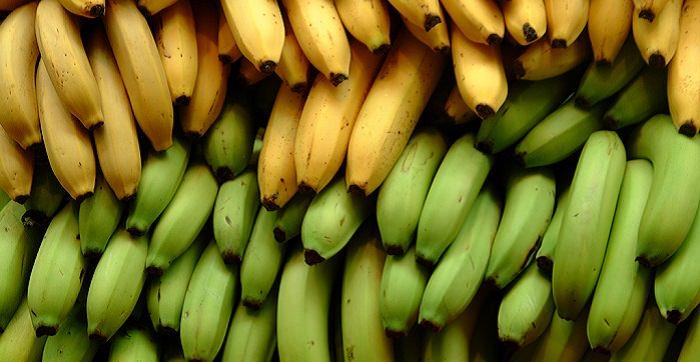 טיפול טבעי בהרעלת מזון