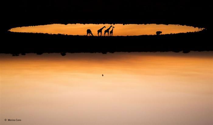 תחרות צלם הטבע של השנה