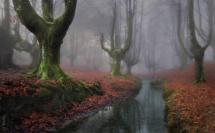יערות מיסתוריים
