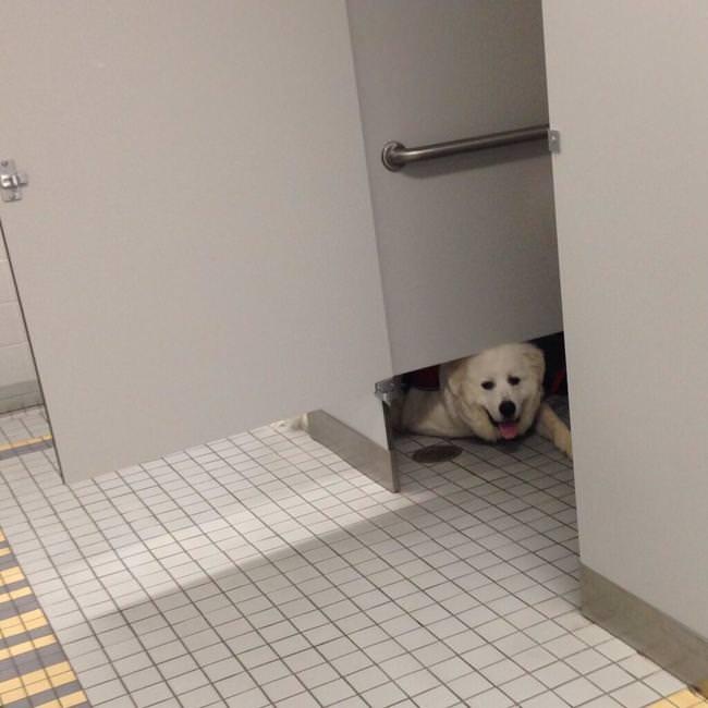 חיות בשירותים