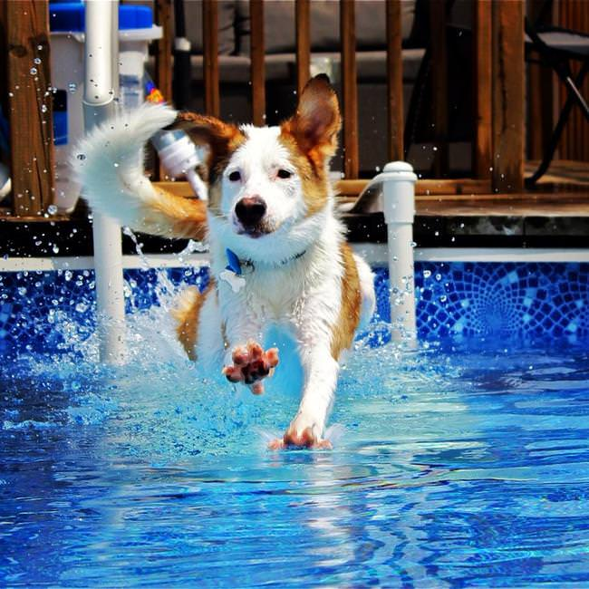 כלבים בבריכה