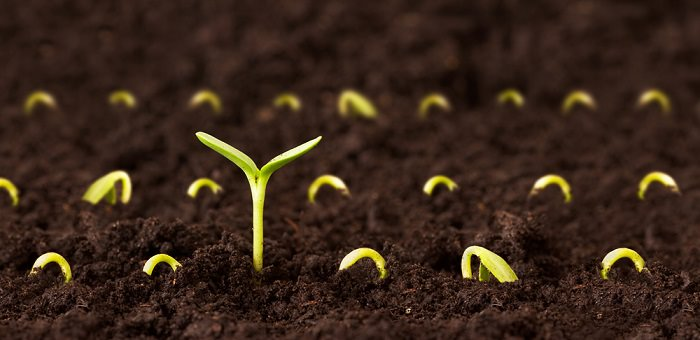 סיפור מרגש על זרע והצלחה