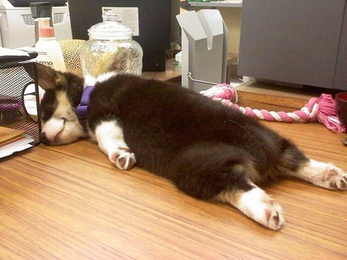 כלבים במקום העבודה