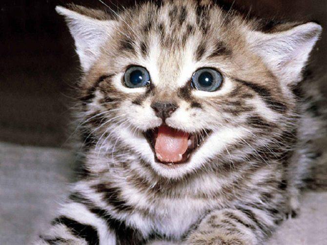 חתולים מחייכים