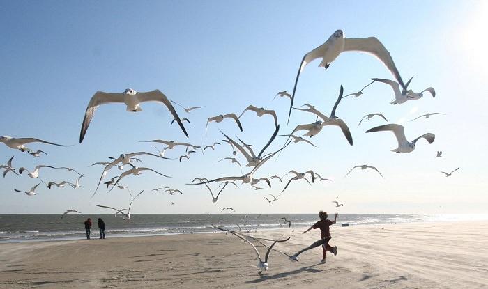 סדר במחשבות: ילד רץ בים וסביבו ציפורים