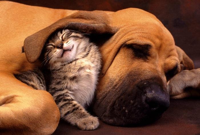 כלבים וחתולים חברים