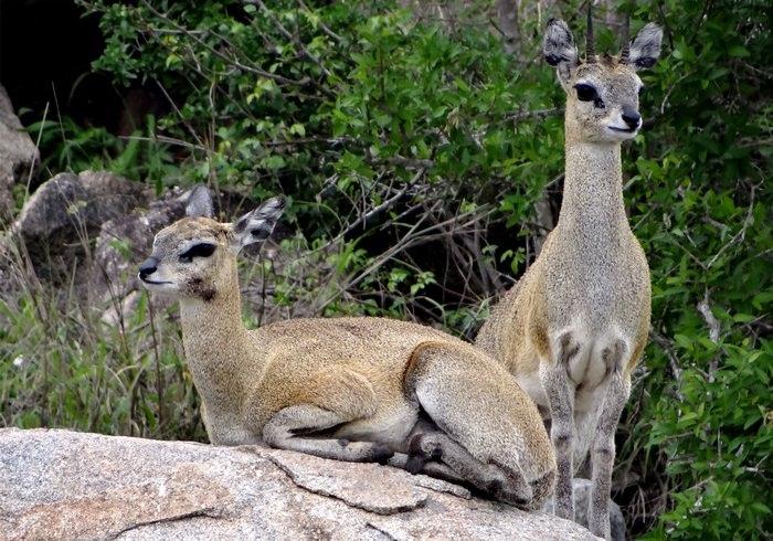 חיות מדהימות ומפתיעות